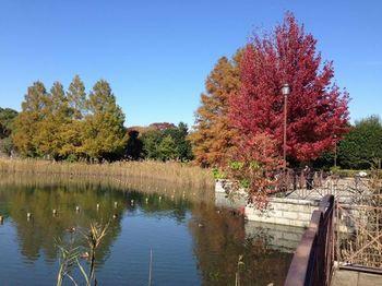 柏の葉公園.JPG
