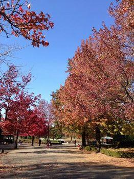 柏の葉公園2.JPG