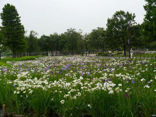 水元公園2.jpg