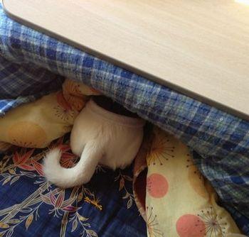 コタツ犬.jpg
