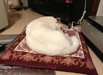 O次郎の寝姿.jpg