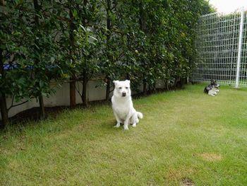 庭のワンコロズ.jpg